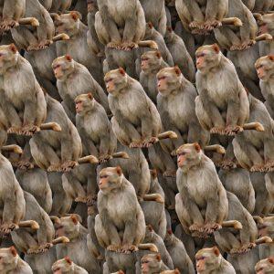 Monkey 22