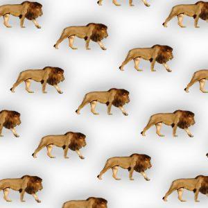 Lions 25