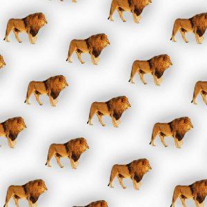 Lions 26