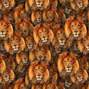 Lions 23