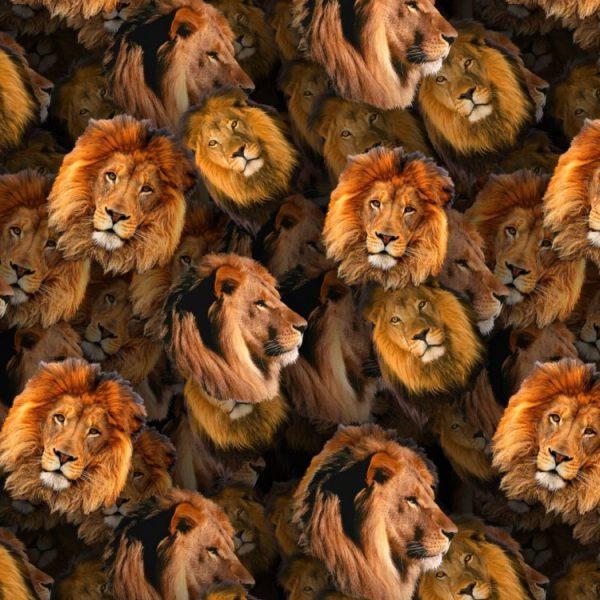 Lions 22