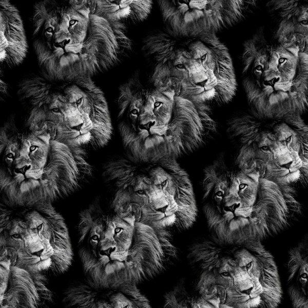 Lion Faces 23