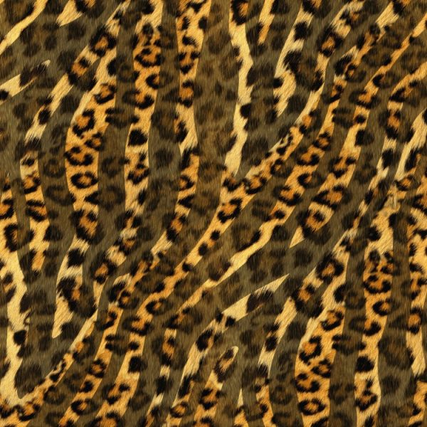 Leopard Zebra 22