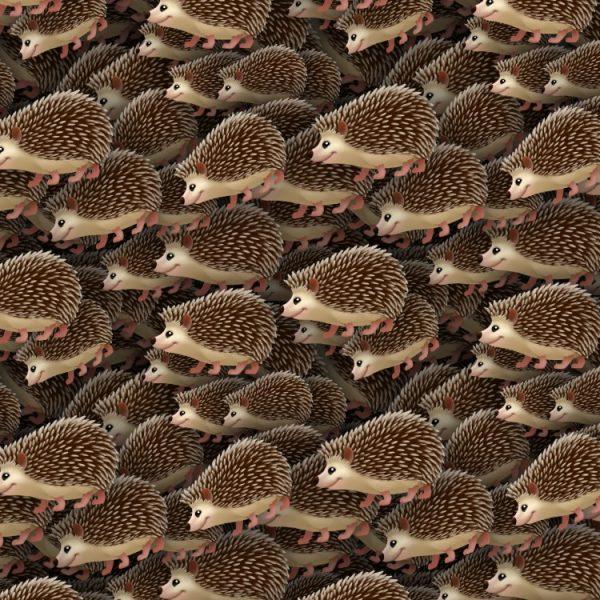 Hedgehogs 22