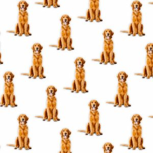 Golden Retrievers 23
