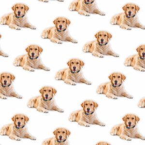 Golden Retrievers 22