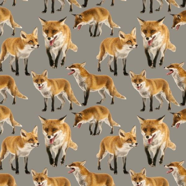Foxes 23