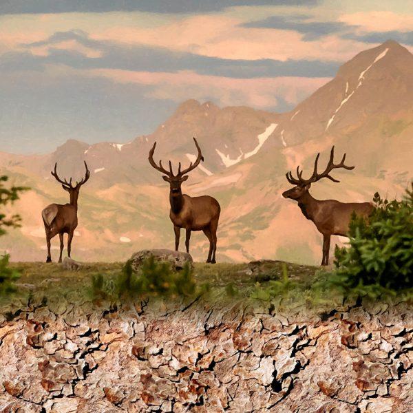 Elk Ridge 11x16