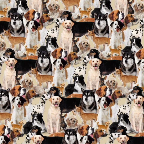 Dogs 27