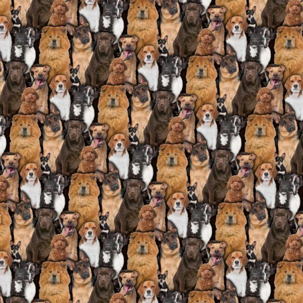 Dogs 22