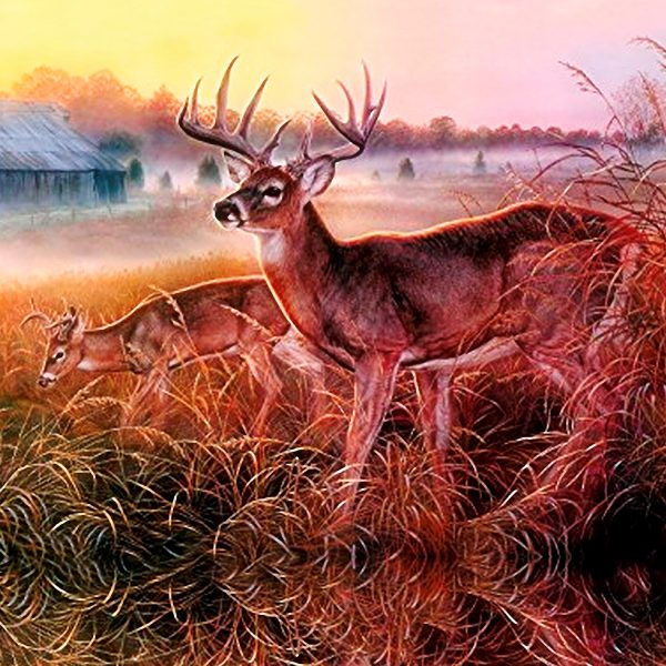 Deer in Grass 22