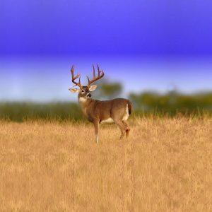 Deer Field 15x17