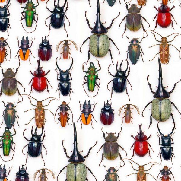 Beetles 23