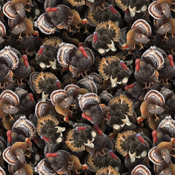 Turkeys 22