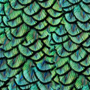 Peacock Pin Feathers 24