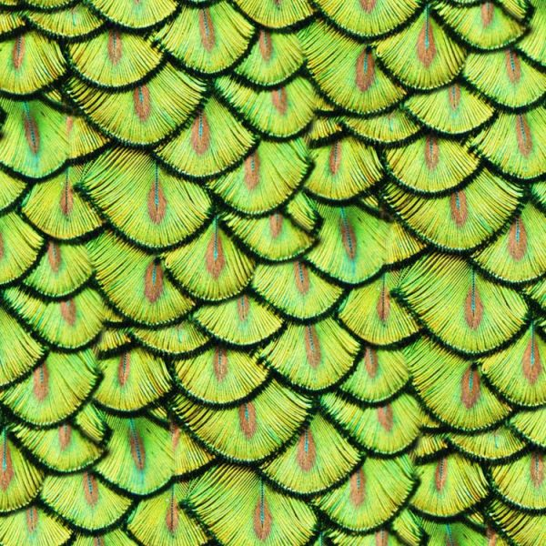 Peacock Pin Feathers 23