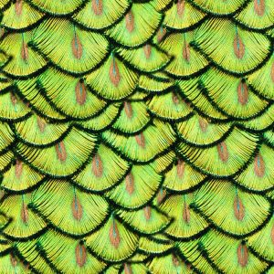 Peacock Pin Feathers 22