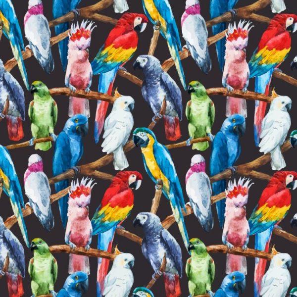 Parrots 23