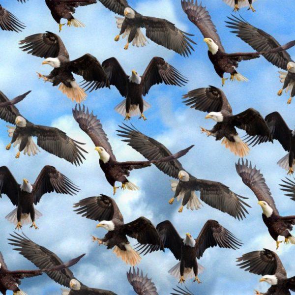 Eagles 24