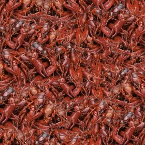 Boiled Crawfish 22