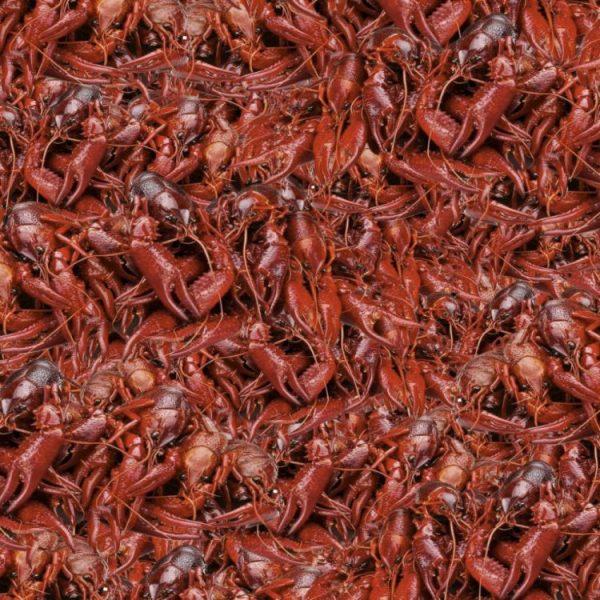 Boiled Crawfish 22