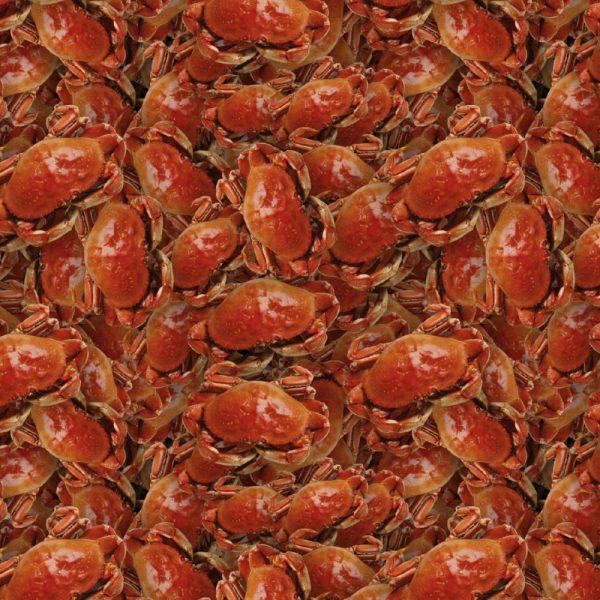 Crab 23