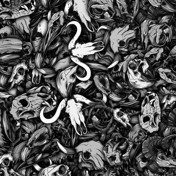 Animal Skulls 23