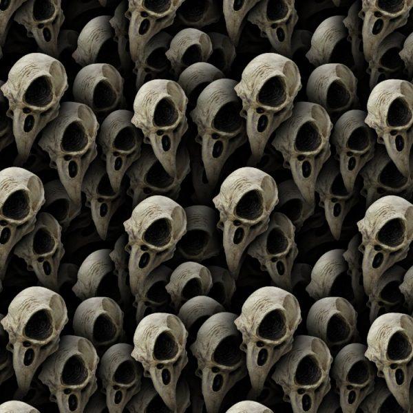 Bird Skulls 22