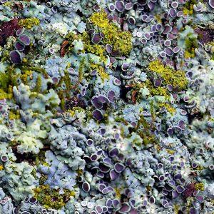 Purple Fungus