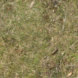 Grass 30