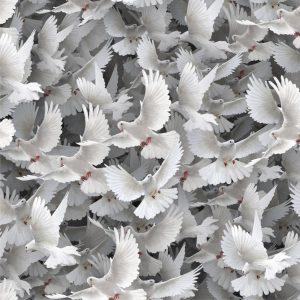 White Doves 22