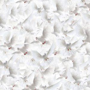 White Doves 23