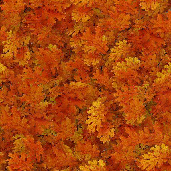 Autumn Leaves 24