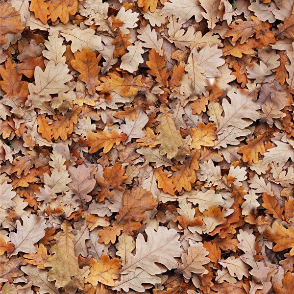 Autumn Leaves 27