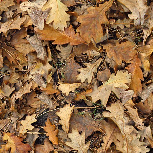 Autumn Leaves 28