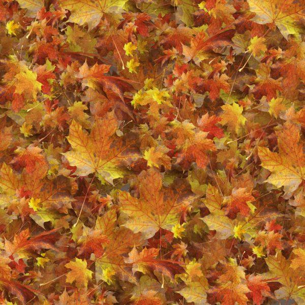 Autumn Leaves 29