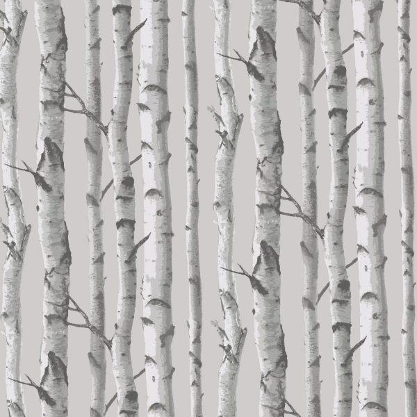 Birch Trees 77