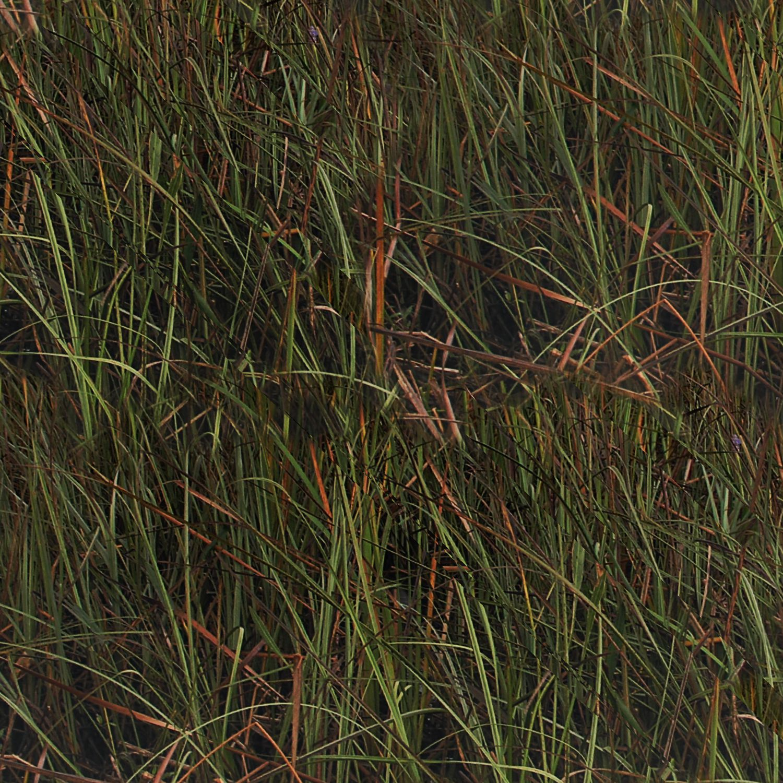 Florida Everglades 23 Camouflage