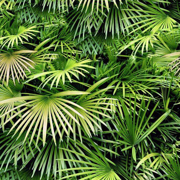 Florida Palmetto 22 Camouflage