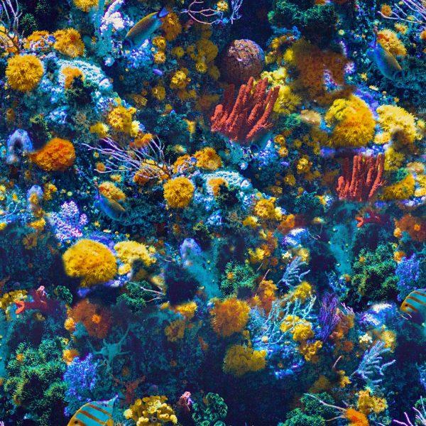 Coral Reef 22