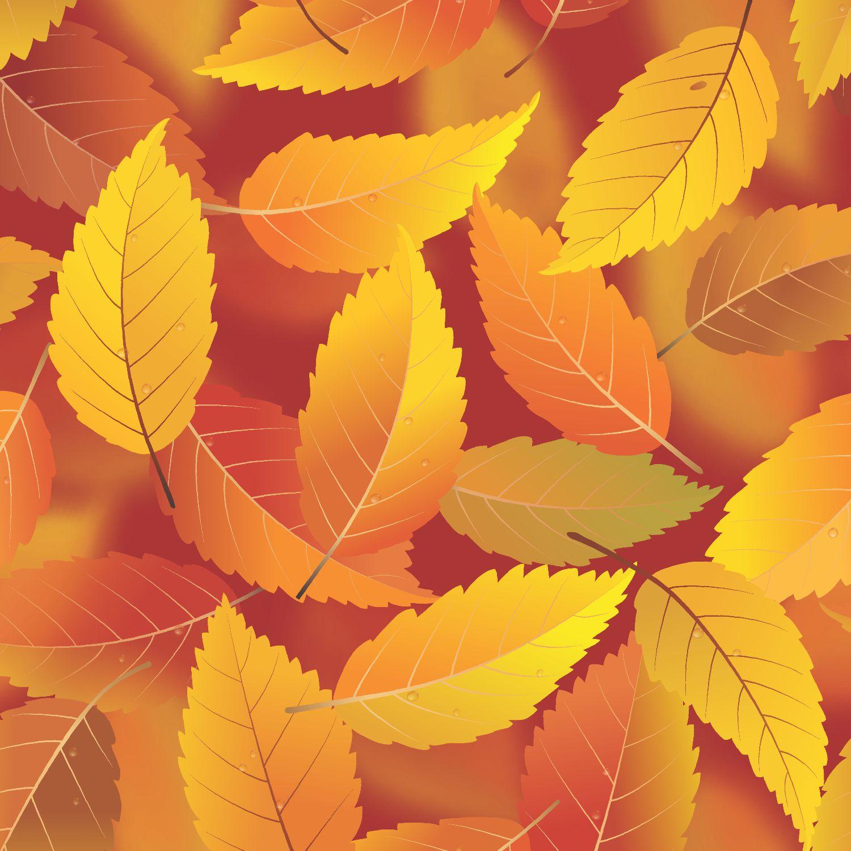 Autumn Cartoon Leaves