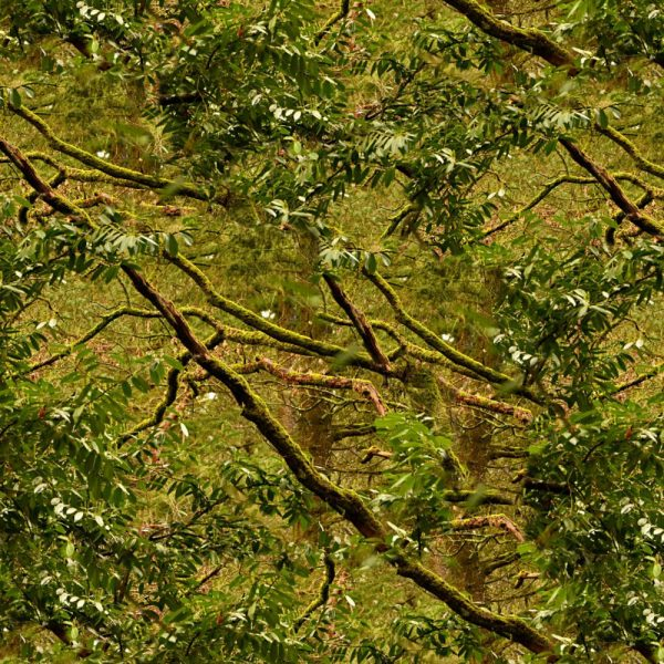 Mossy Branch Camouflage