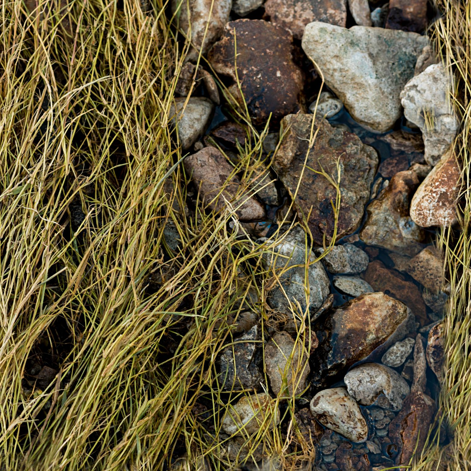 Rock and Grass Camouflage