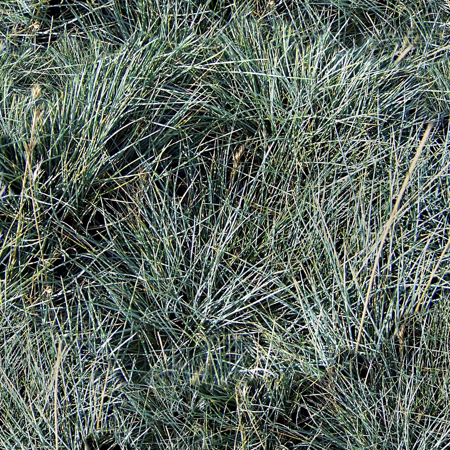 Gray Grasses Camouflage