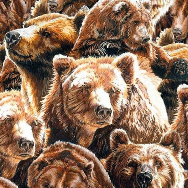 Bears 24