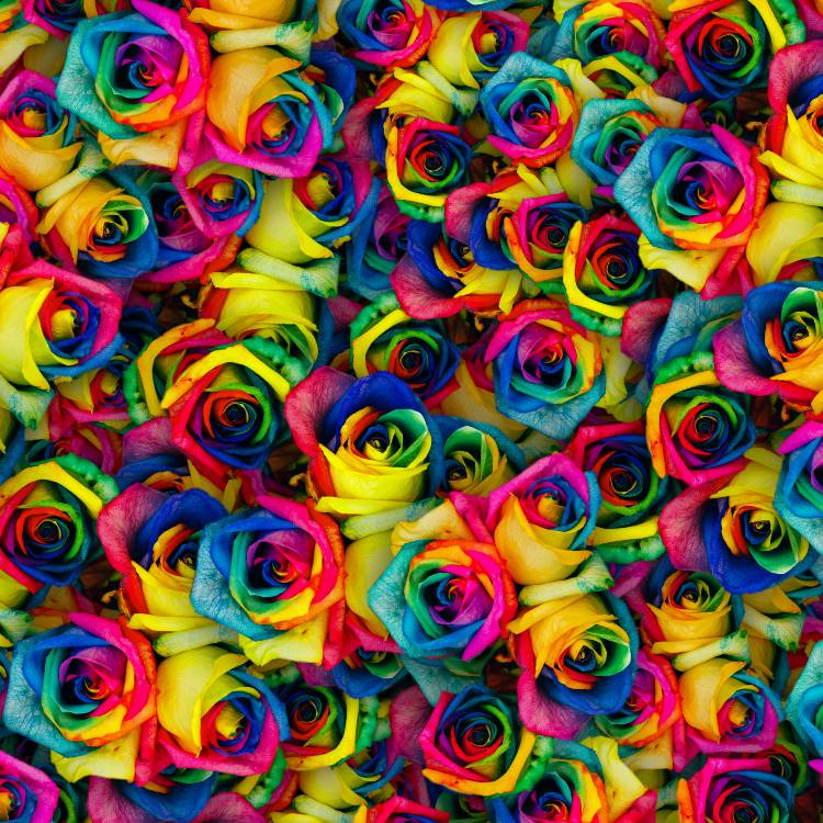 Dyed Roses 22