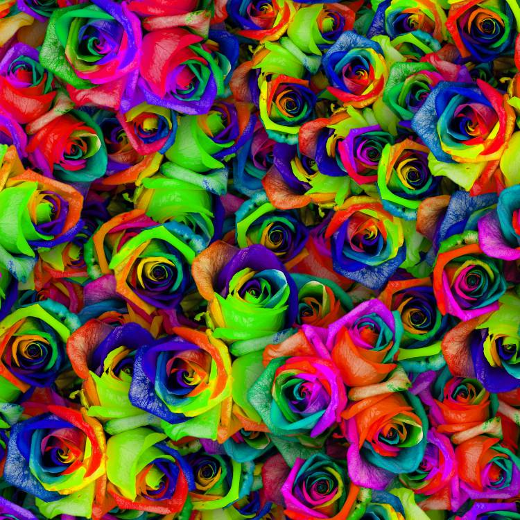 Dyed Roses 23
