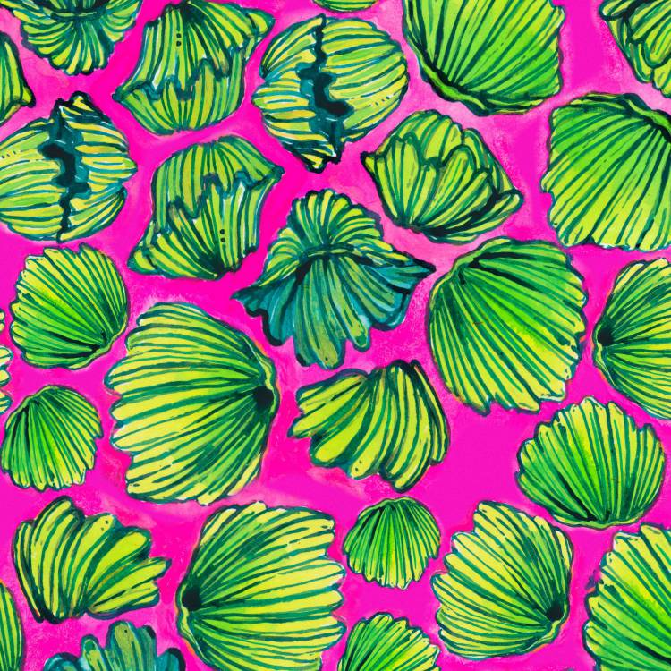 Lilly Clams 23