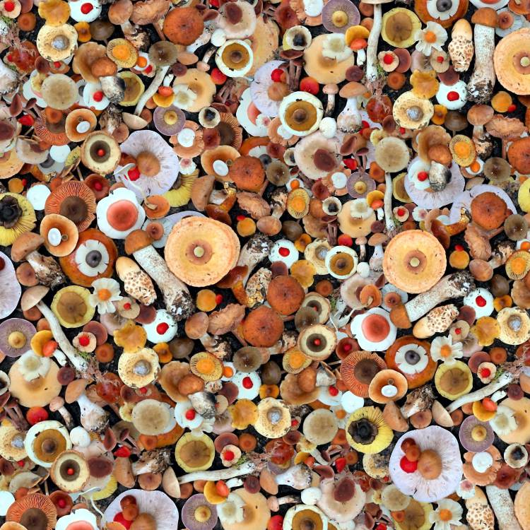 Mushroom Fungi
