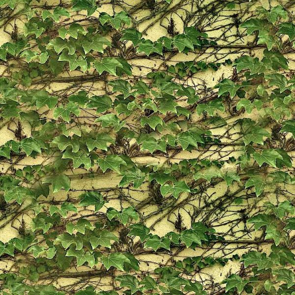 Climbing-Ivy-on-Wall-thumb